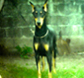 dobermann100's picture